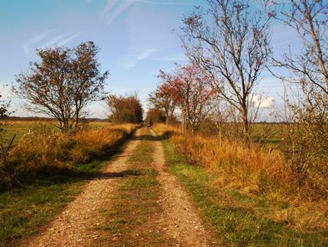 Schönkirchen, Ökokonto Wildes Moor